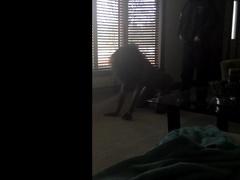 Hung White Thug Drills Tall Black Bitch