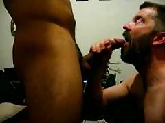 Hairy bear sucking cock
