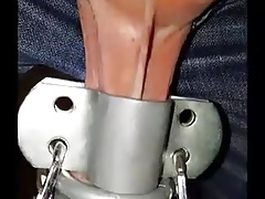 Testicle torture